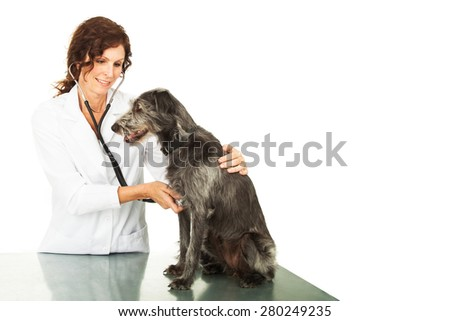 Caring and happy female professional veterinarian doctor examining a mixed breed dog. Isolated on white with copy space. - stock photo