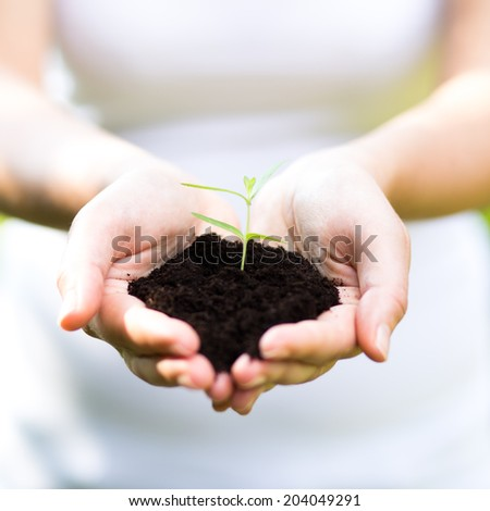 caring Human hands holding green small plant new life concept.  - stock photo
