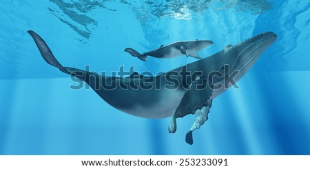 Caring Mother Humpback - A attentive Humpback whale mother makes sure her calf stays close to her near the ocean surface. - stock photo