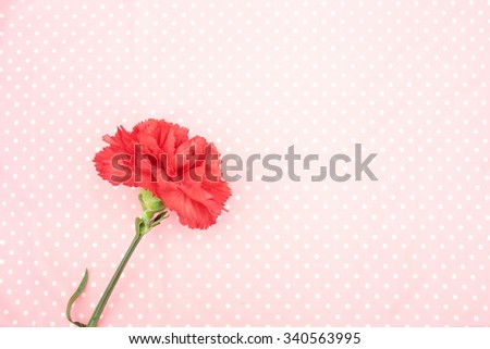 Carnation - stock photo