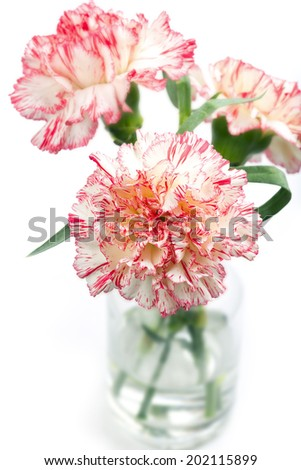 Carnation flower in a vase, isolated, shallow DOF - stock photo