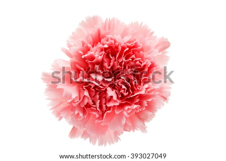 carnation flower isolated on white background - stock photo