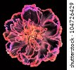 carnation flower on black background - stock photo
