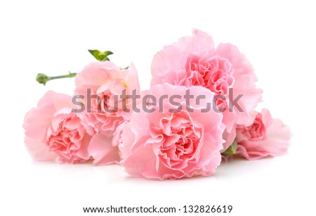 Carnations on white - stock photo
