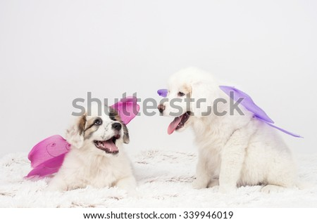 Carnival mastiff puppies dog wearing fairy wings. - stock photo