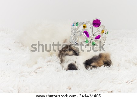 carnival mastiff puppy sleeping.Mastiff puppy dog with crown  - stock photo