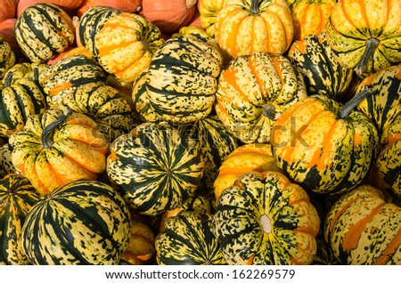 Carnival winter squash on display at the farmers market - stock photo