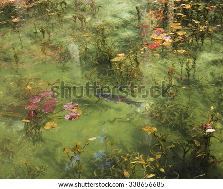 carp fish in old pond - stock photo