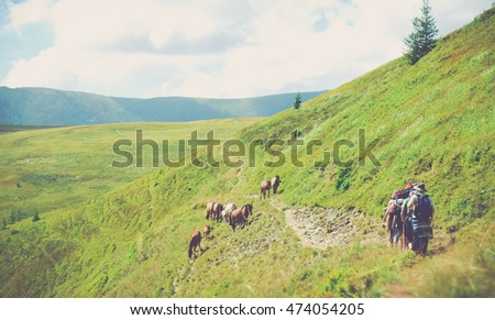 carpathian mountains living
