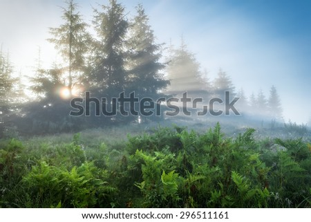 Carpathian Mountains. The rays of the rising sun streaming through the trees.