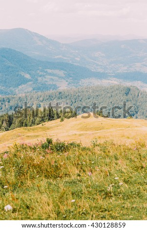 Carpathian pine forest hills landscape under majestic sky with yellow meadow on foreground - stock photo