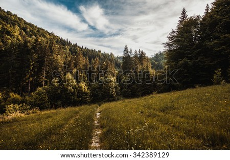 Carpathians mountains - stock photo