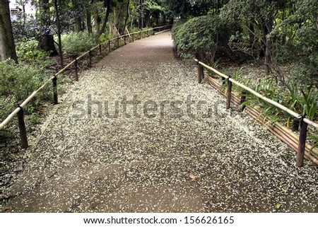 Carpet of cherry blossoms - stock photo