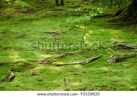 Elegant Carpet Of Green Moss With Roots From Trees On A Forest Floor