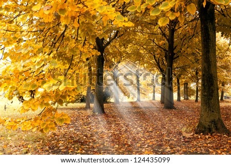 carpet of leaves under  the trees - stock photo