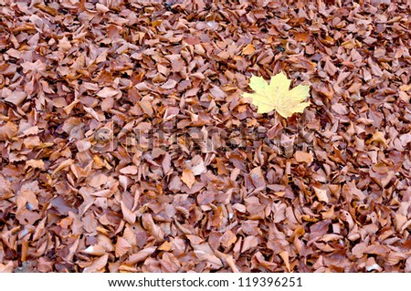 carpet of orange leaves, landscape abstract colorfull image