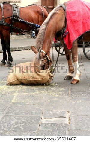 Carriage Horse Eating - stock photo