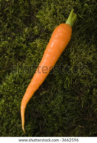 Carrot - stock photo