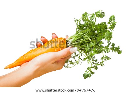 carrot in a hand isolated on white - stock photo