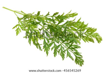 carrot leaf branch isolated white