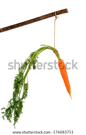 carrot on a stick. fresh fruit and vegetables are always healthy. symbolic photo for motivation. - stock photo
