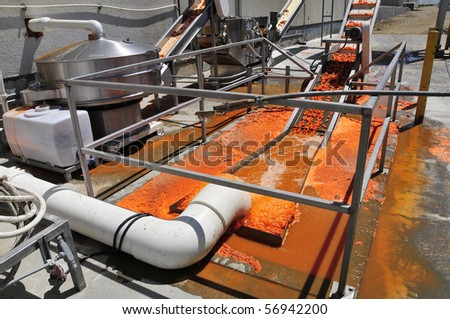 Carrot processing plant: Product is washed before being carried along on a conveyor belt - stock photo