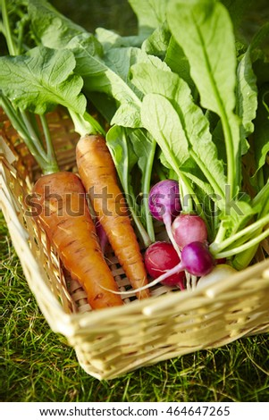 Carrots and turnips