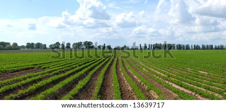 Carrots field and cloud - stock photo