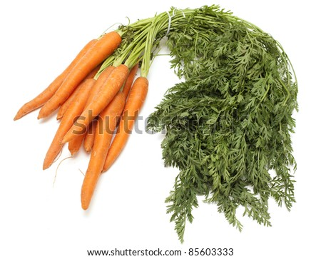 carrots with leafs on white background - stock photo