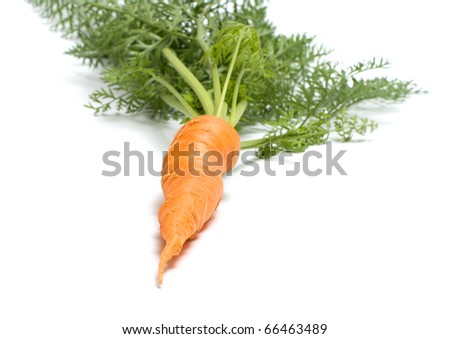 Carrots with tops isolated on a white background. - stock photo
