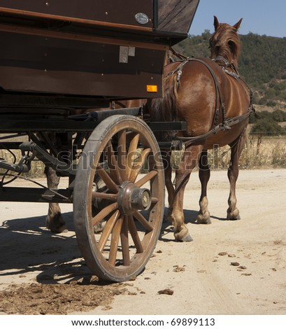 Cart-horse harnessed with a carriage - stock photo