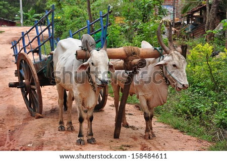 Cart pulled by ox - stock photo