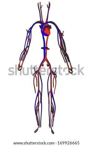 cartoon image of circulatory system