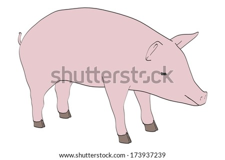 cartoon image of pig animal