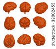 Cartoon style 3D model of brain in various angles. - stock photo