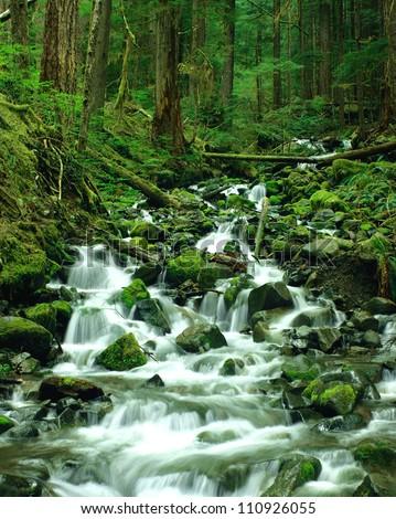 Cascade falls, Olympic National Park, Washington, USA - stock photo