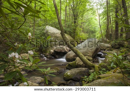 cascade flowing through lush forest with rhododendron flowers - stock photo