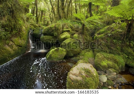 cascade in rainforest, small waterfall in lush moss and lichen-covered temperate rainforest, New Zealand - stock photo