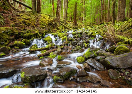 cascade waterfall in the forest, Olympic national park, WA, US - stock photo