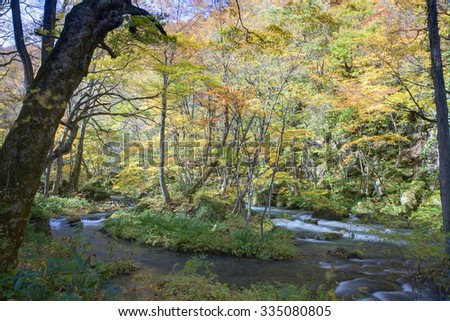 Cascades of mysterious Oirase Stream flowing through the autumn forest in Towada Hachimantai National Park in Aomori Japan - stock photo
