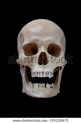 Cast of a cleaned human skull with an open mouth isolated on black