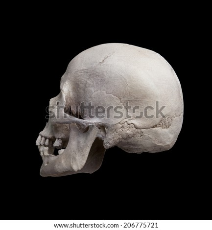 Cast of the left side of a cleaned human skull looking away from the viewer isolated on black - stock photo
