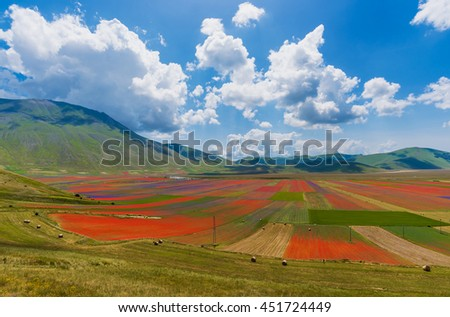 Castelluccio di Norcia 2016 (Umbria, Italy) - The flowering in the highland of Sibillini Mountains
