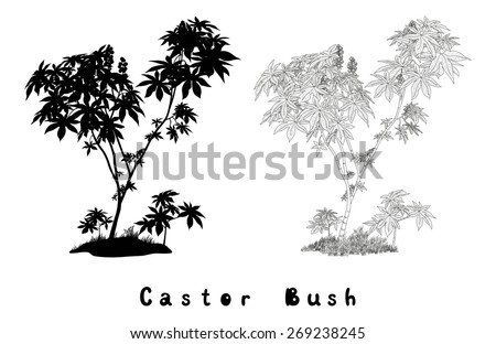 Castor Plant with Leaves, Fruits and Grass Black Contours, Silhouette and Inscriptions Isolated on White Background.  - stock photo
