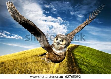 casual flight on farm - stock photo