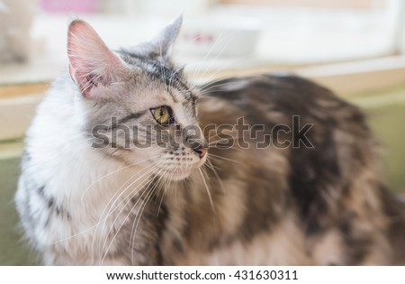 Cat, - stock photo