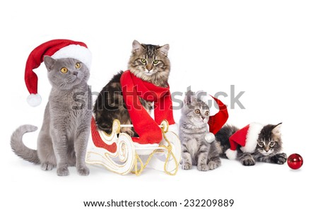 cat  a santa hat - stock photo