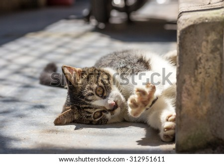 Cat/adorable meowing tabby kitten outdoors - stock photo