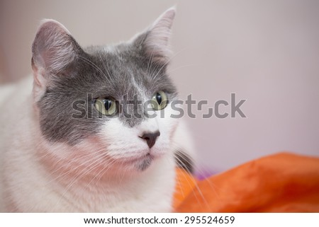 Cat alone on the bed