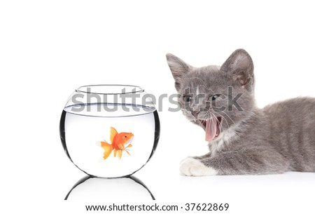 Cat and a fish in a fish bowl isolated on white background - stock photo